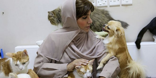 Meet the woman who has 500 cats in Oman